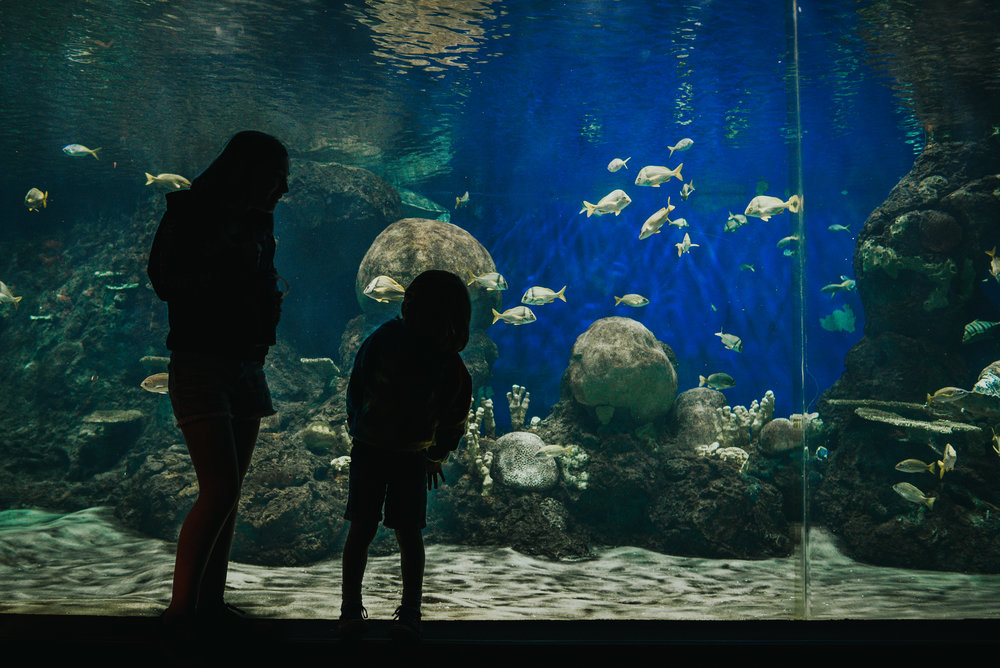Brother and sister enjoy looking at the sea life at Sea World San Diego in California.