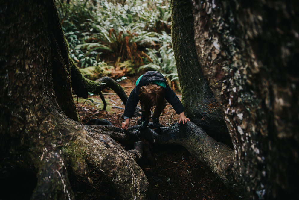 Little boy enjoys hiking in trees in the Pacific Coast forest in Oregon.