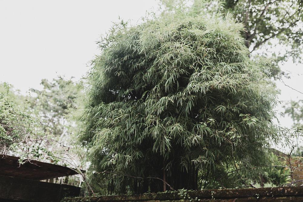 bamboo-bali