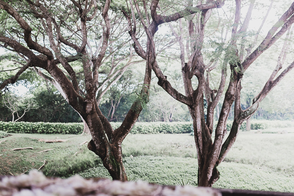 wedding-bali-trees