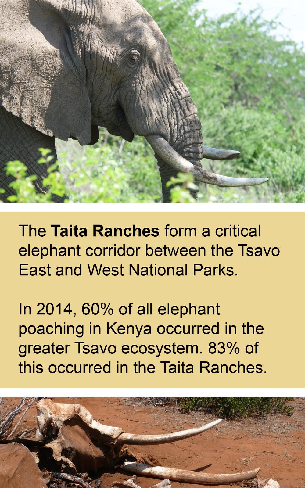 taita ranches elephant corridor tsavo kenya