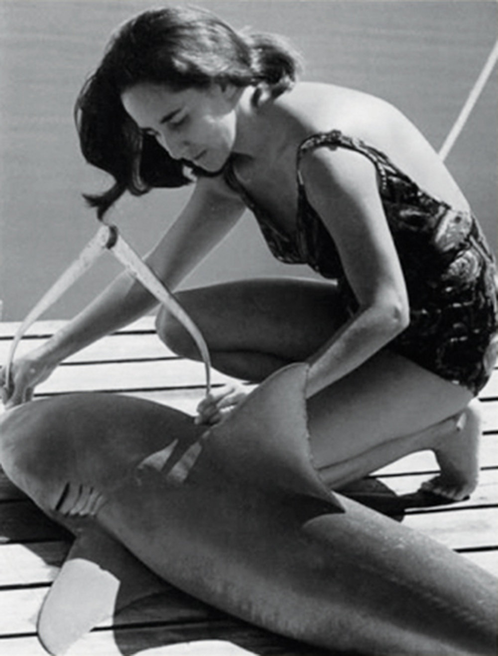 Genie measures a bull shark