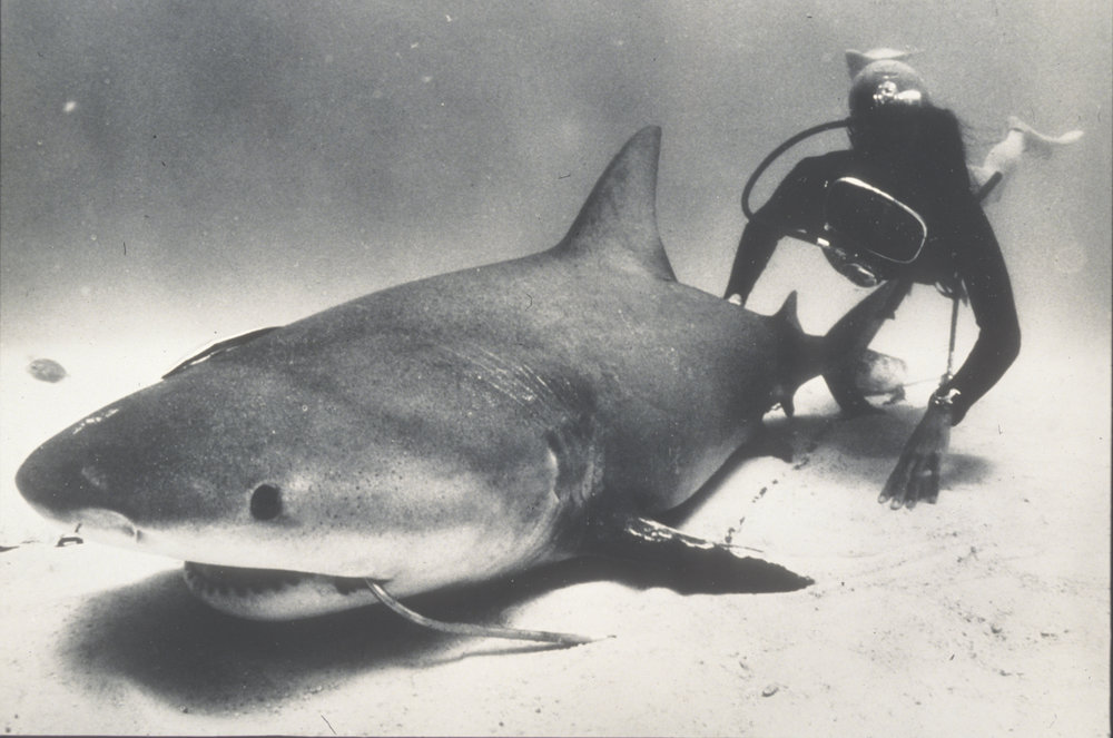 Genie inspects a bull shark caught on a line in Mexico
