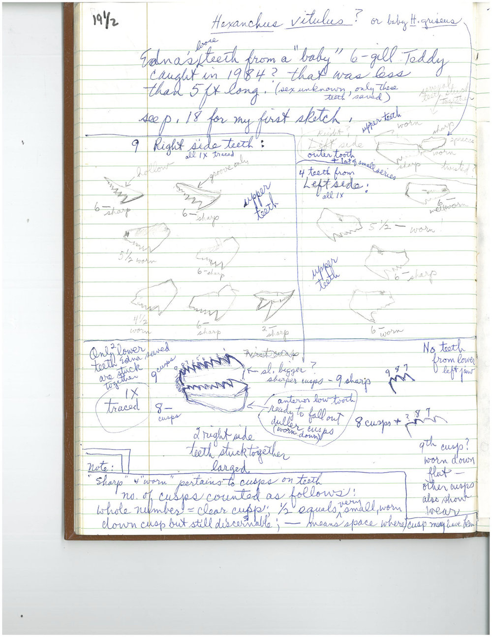 EC notes.2Jul1986.Bermuda.jpg