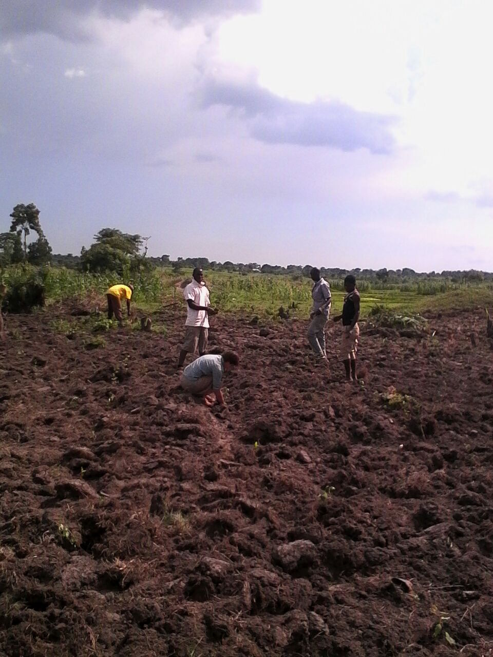 Installation of the new eucalyptus garden in Iganga
