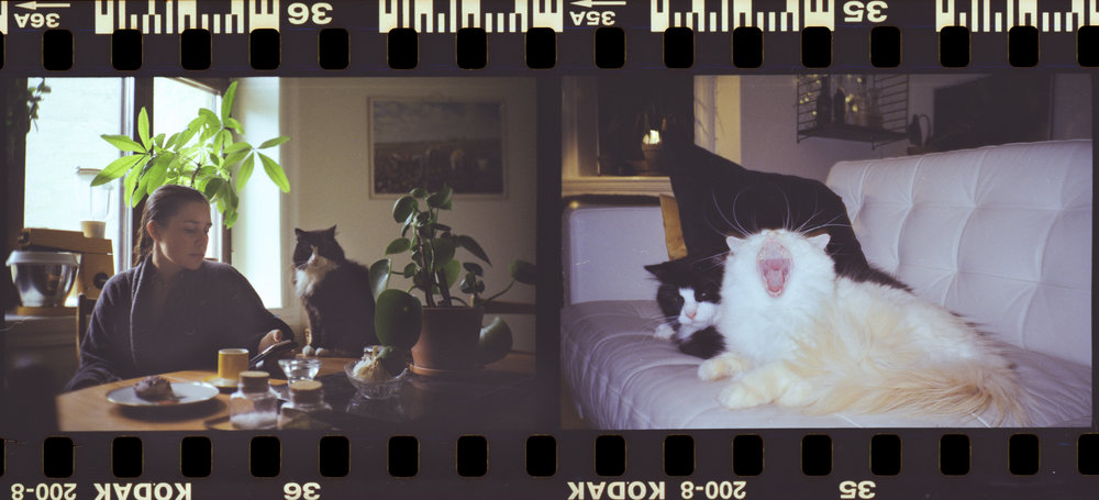 Cat Life I / Kodak Gold 200 / Yashica t3