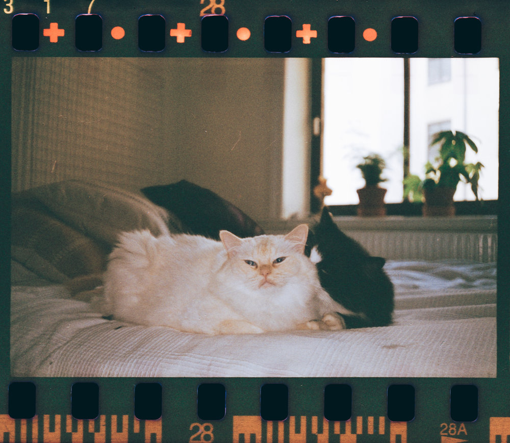 Cat Life II / Extrafilm / Olympus Mju I