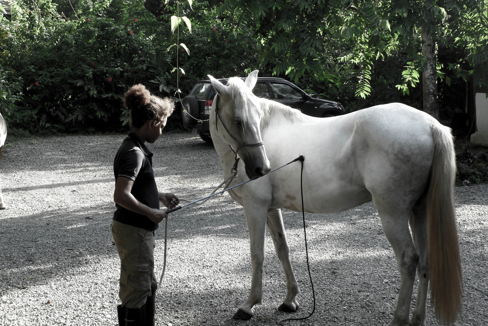 Porcupine Game Pony Club Costa Rica