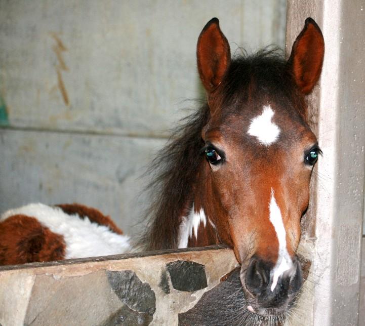 cat & horse meet 063