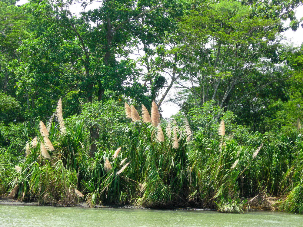 bullrushes in the wind