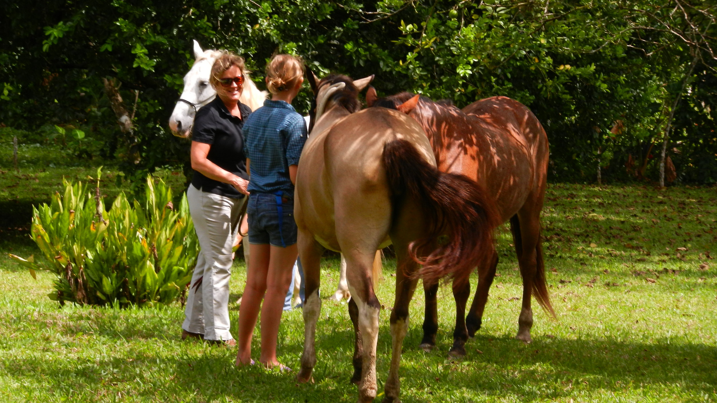 greeting the horses