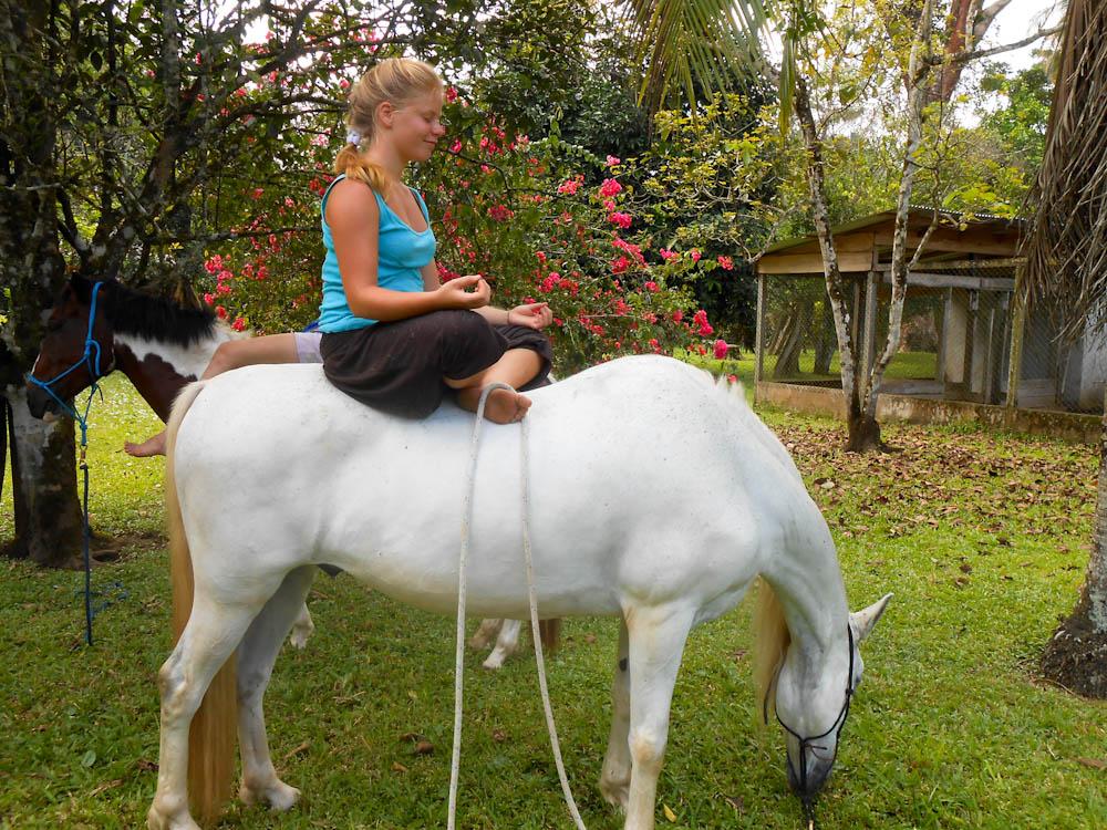 Meditating on Horse