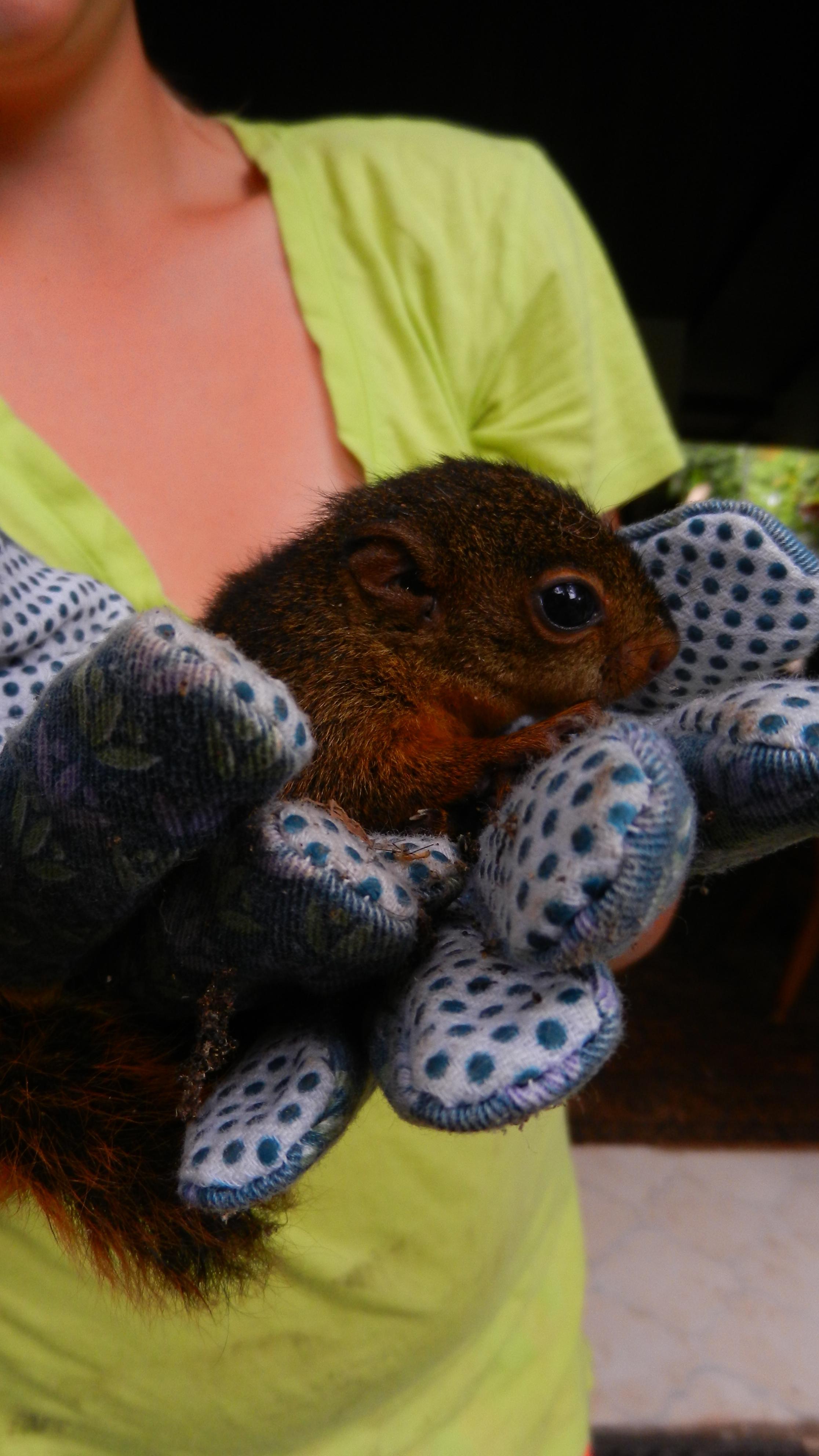 lost baby squirrel