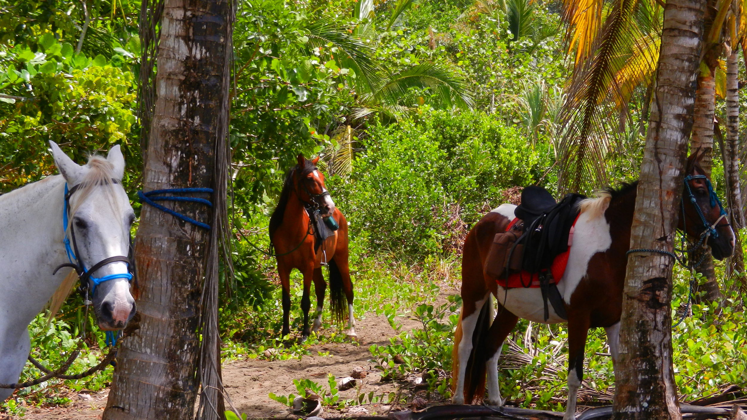 Horse Trails Caribbean Costa Rica