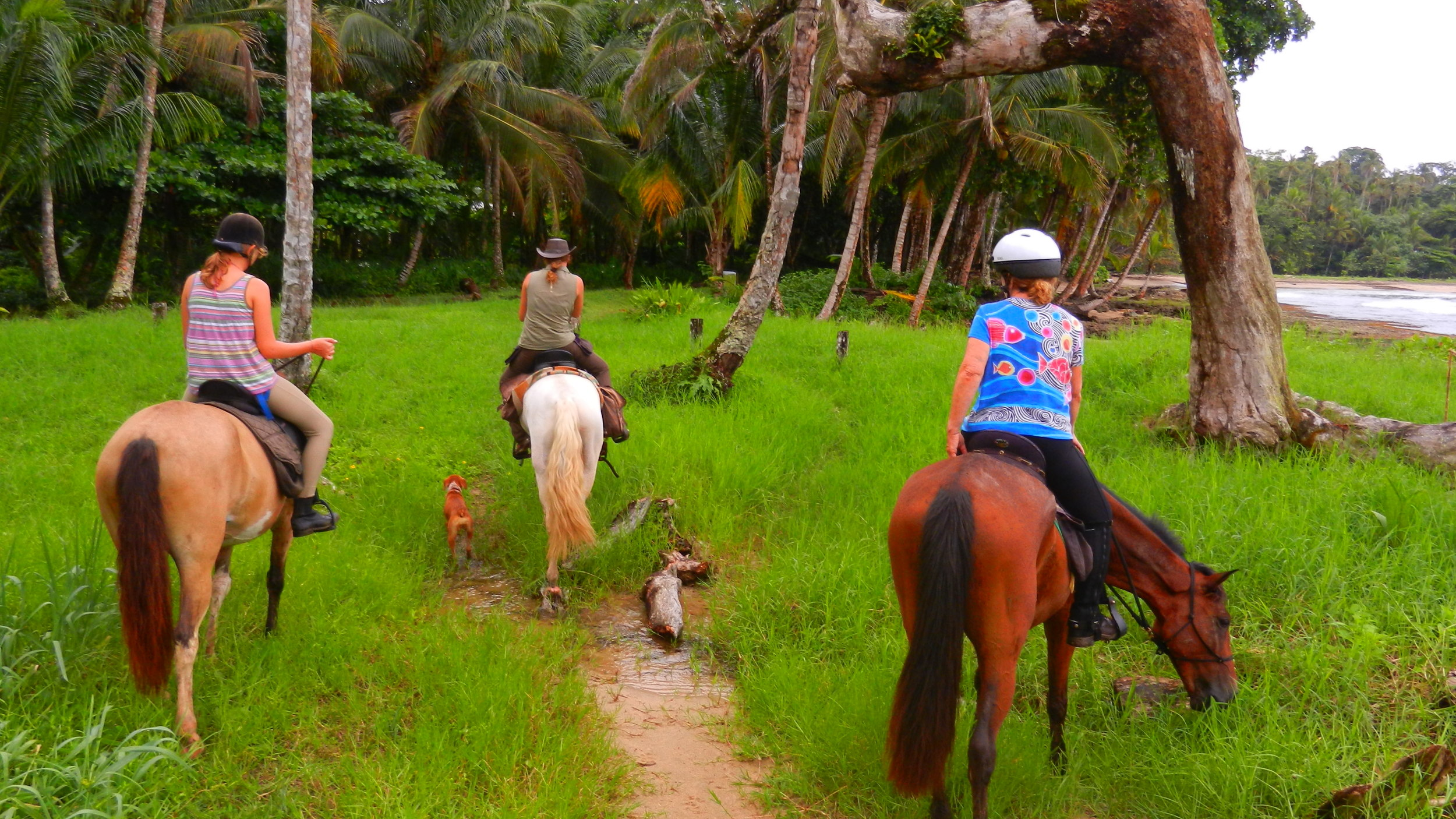 Caribbean beach horse riding