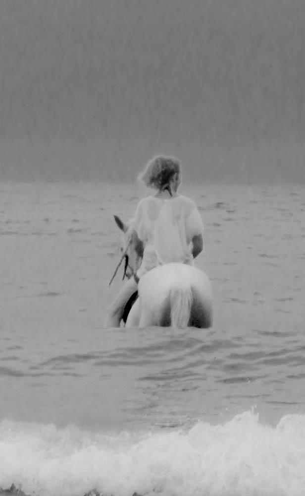 Shiloh the  moon lit Seahorse