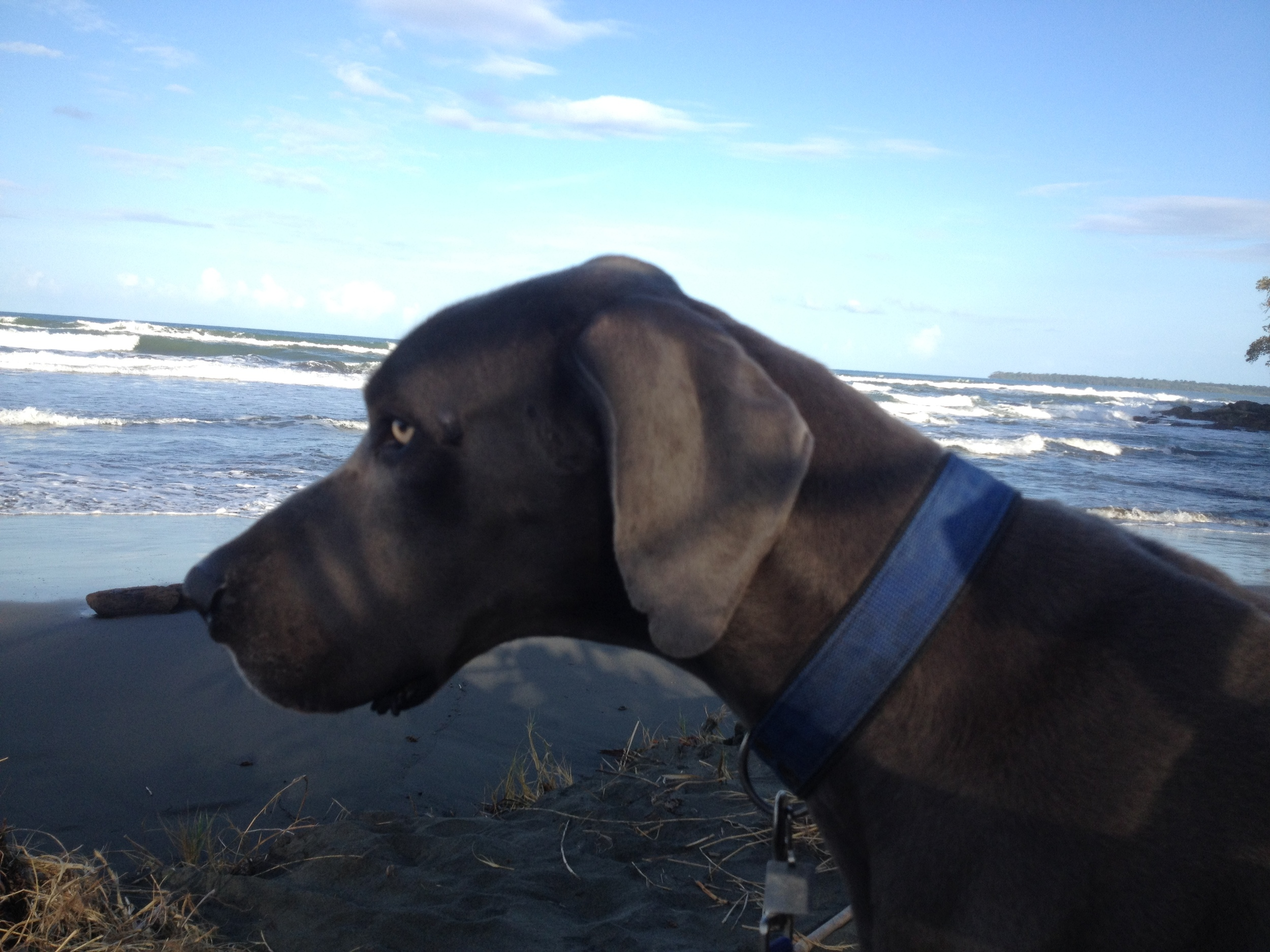 Blue gazing out to sea.