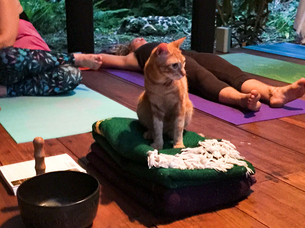 "The Cat's Meow"" Class given Mr. Toby, he likes Savasana very much!"