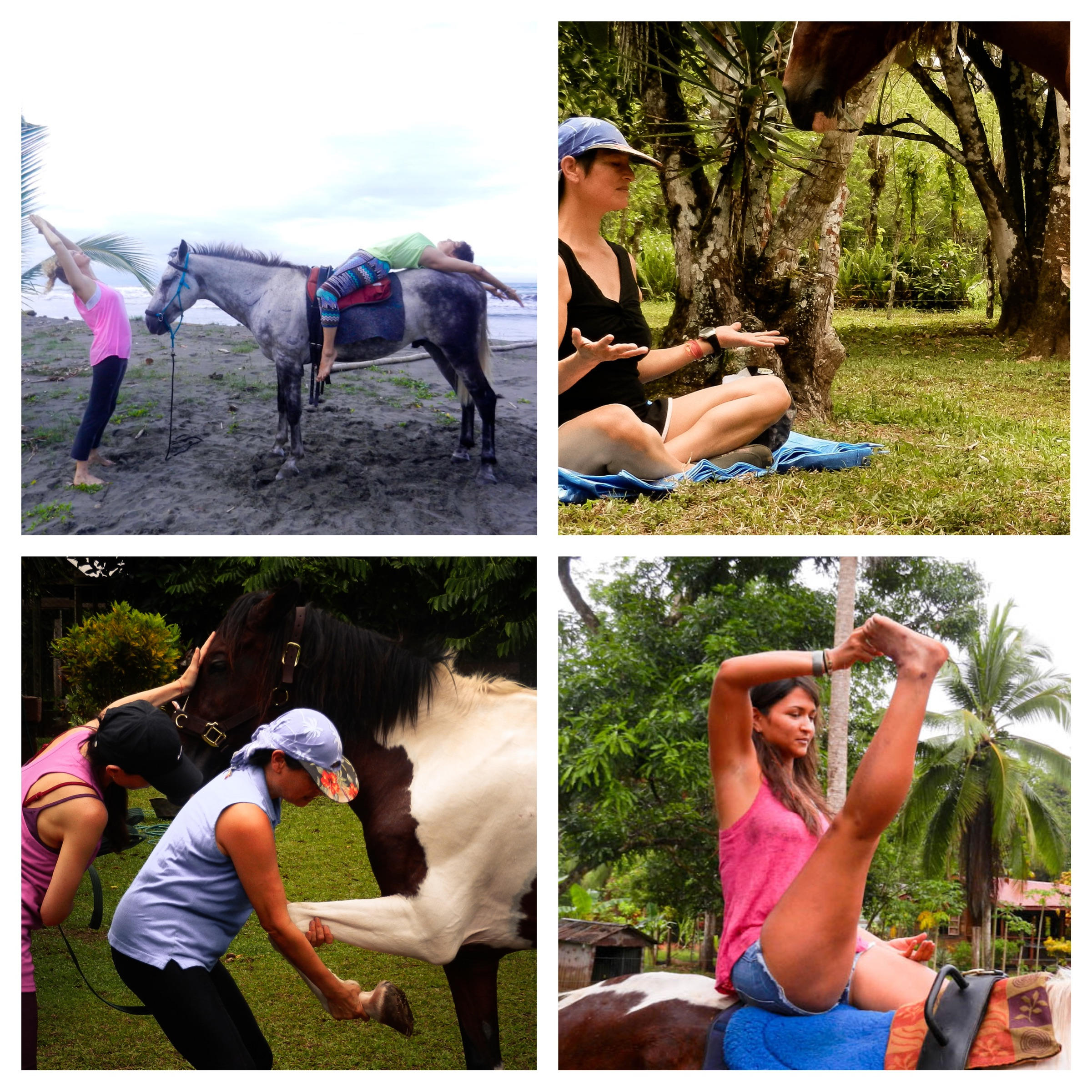 Yoga in Harmony with Horses