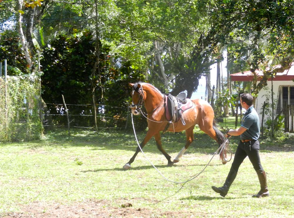 Javier Breton schooling Brego a previously abused Iberian horse