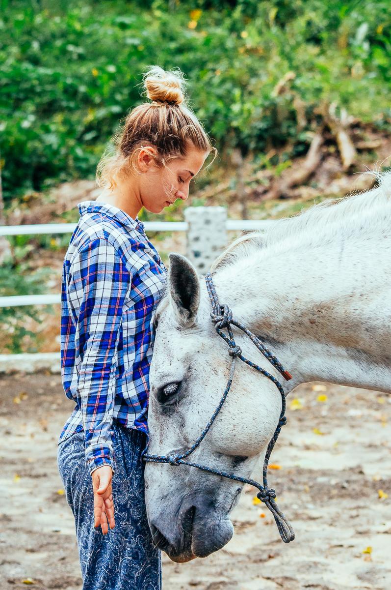 horse-meditation-healing