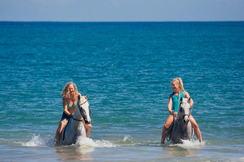 beach-horses-8.jpg