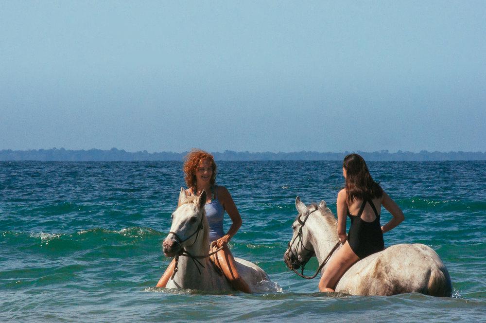 horses-swimming.jpg
