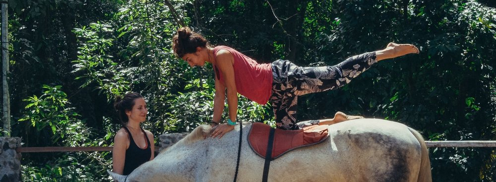 yoga-horses-108.jpg