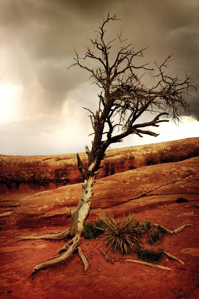 nature049.jpg