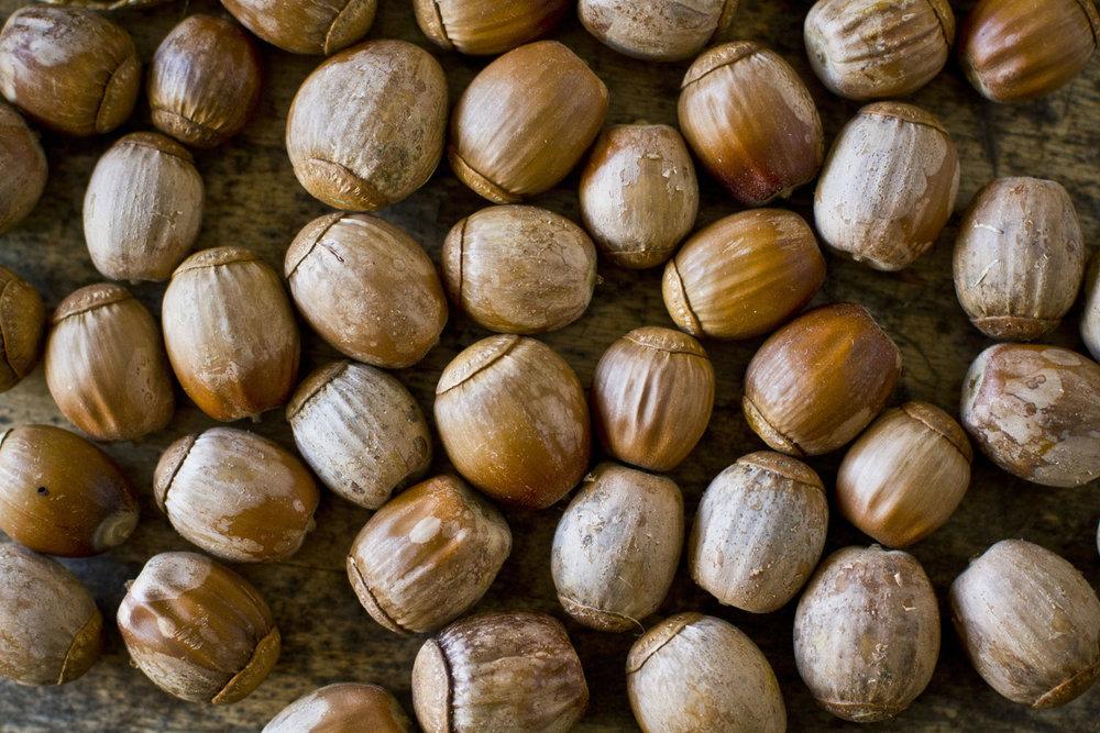 acorn_001.jpg