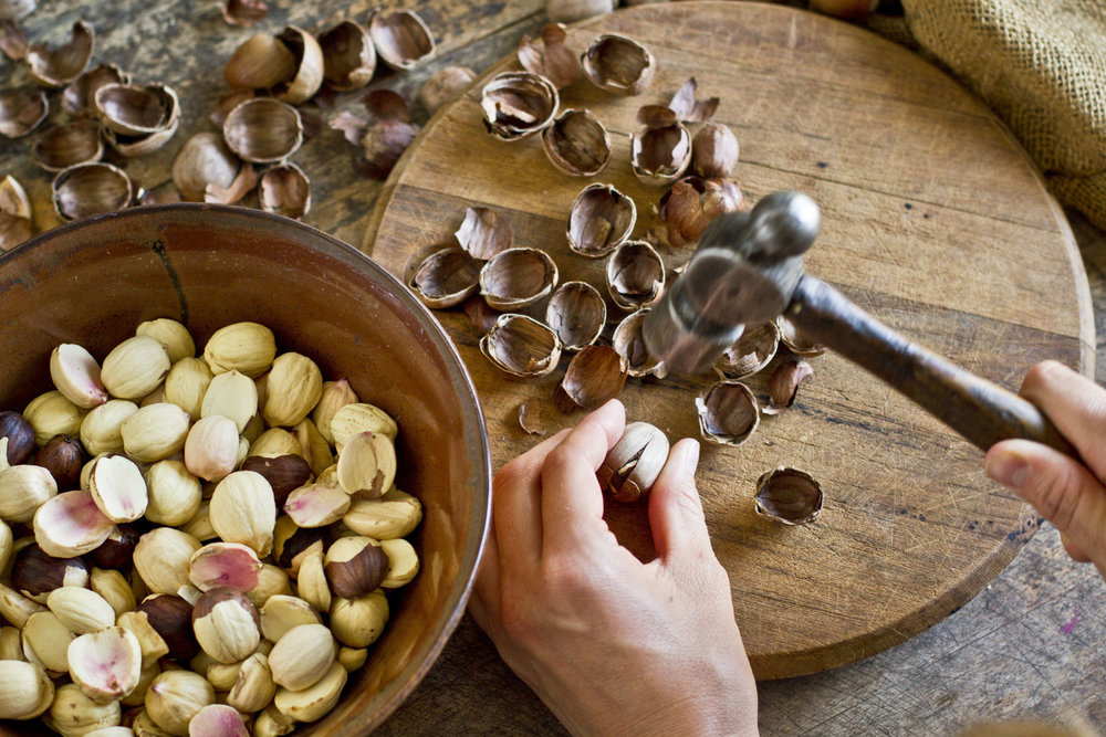 acorn_002.jpg