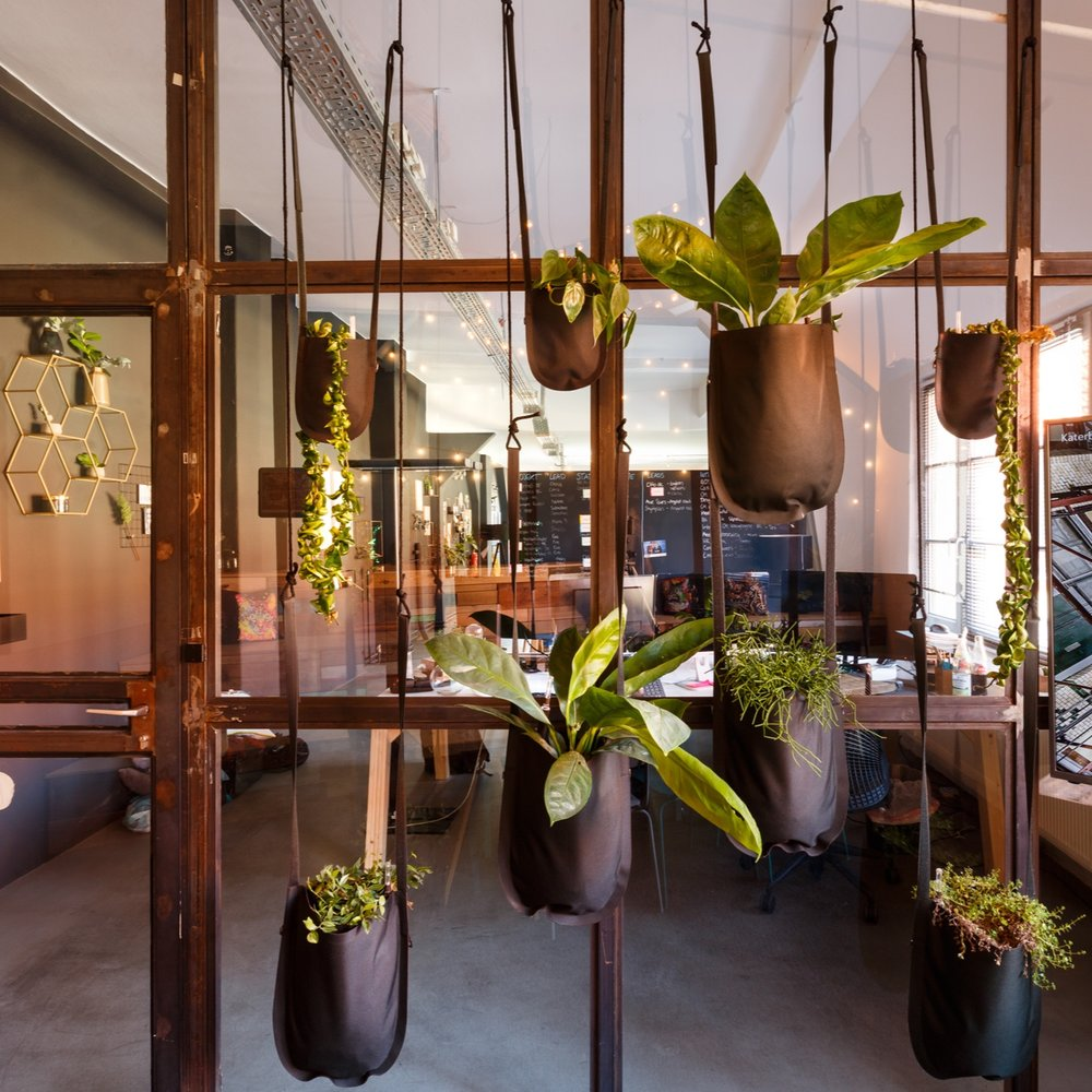 PeakAce-Büro-Glastrennwand-Pflanzendeko-Dittmarandfriends.jpg