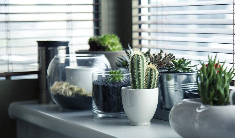 •Cacti/Cactus:Ok, maybe don't go this route if you have kids or curious pets (they willpoke you). But if you aren't worried about any collisions, this is an ideal option. Great for homeowners/renters who travel often and/or don't spend much time at home. This plant is beyond low-maintenance and available in a wide variety of sizes. From large floor Cacti to a teeny-tiny-baby-cactus, this plant is as versatile as they come.