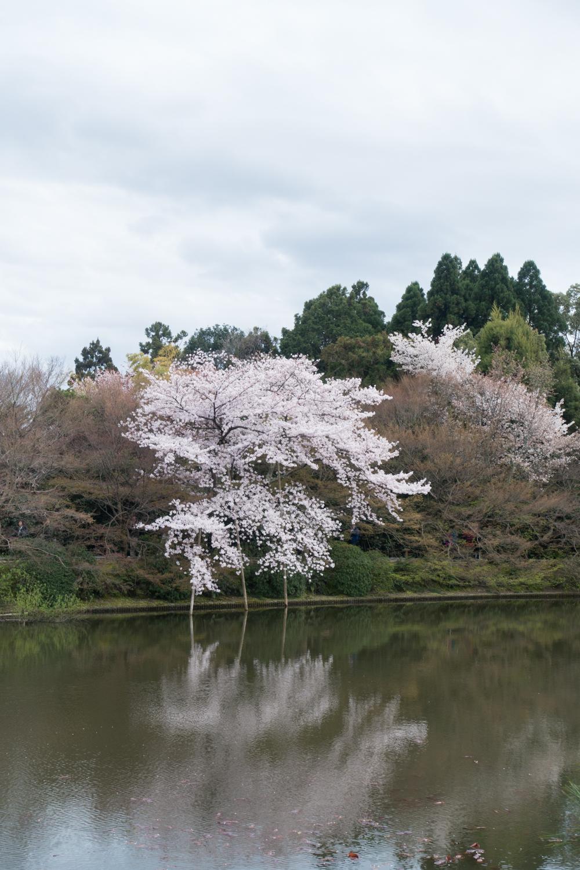 Japan 28