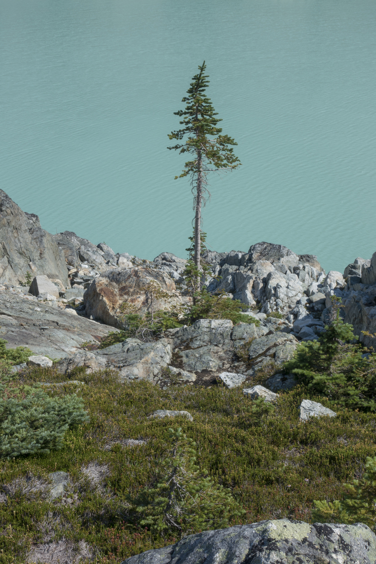 """<a href =""""/work/whistler"""">Whistler<strong>Photo x backpacking expedition to British Columbia.</strong></a>"""