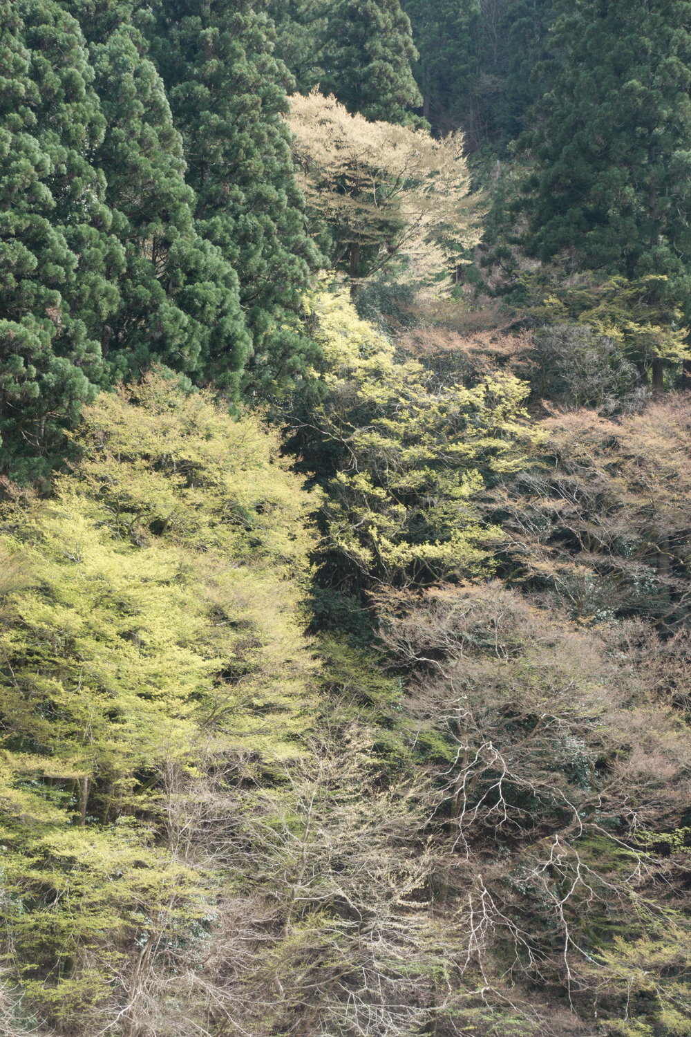 """<a href =""""/work/japan"""">Japan<strong>Travel photo series from Japan.</strong></a>"""
