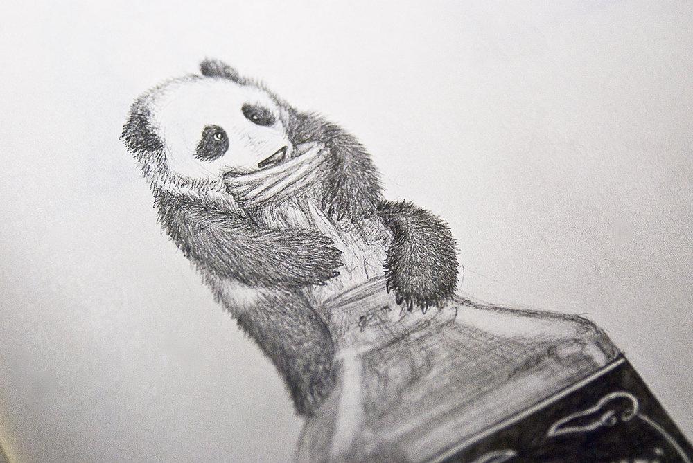 Panda_5.jpg