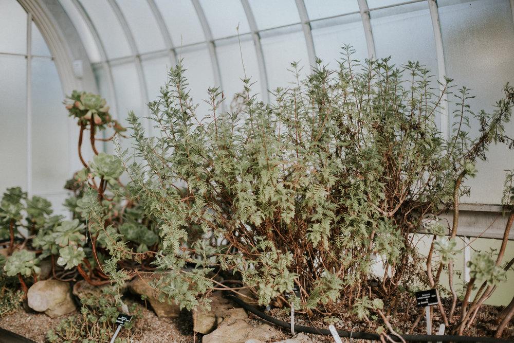Small and Intimate Glasgow Botanic Gardens Wedding