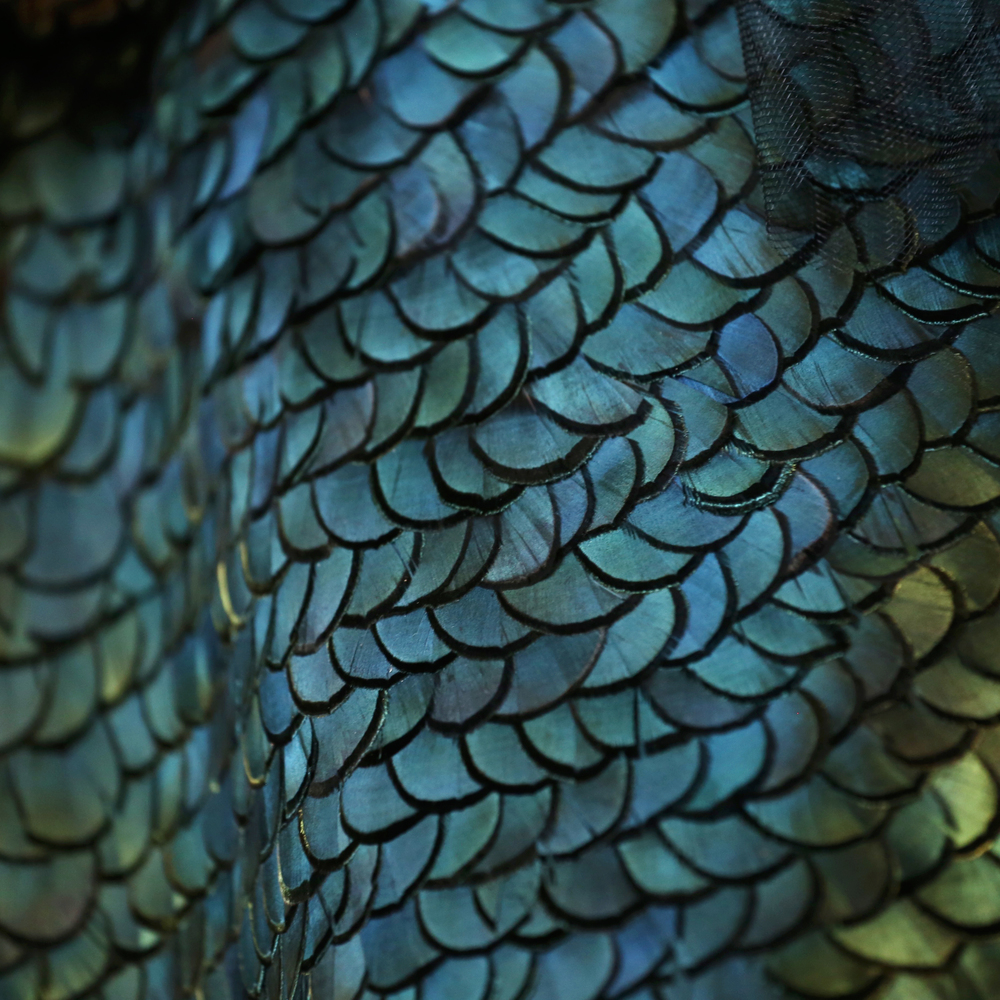 Lady amherst green pheasant feathers