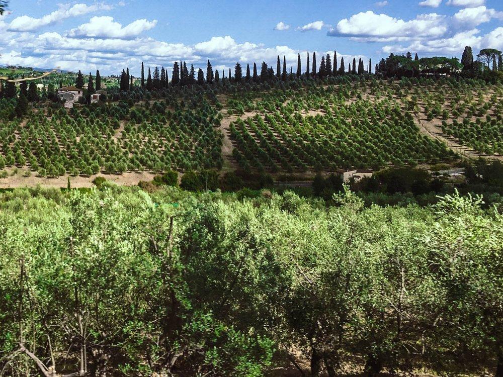 Tuscan_vineyard