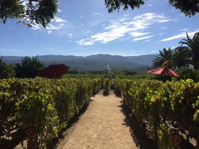 Napa Valley - Heitz Winery Scenic View.JPG