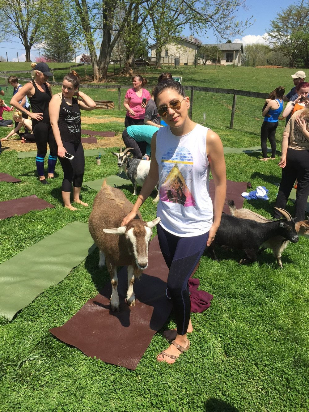 Goat Yoga Maryland By Elly Jane Blog.JPG