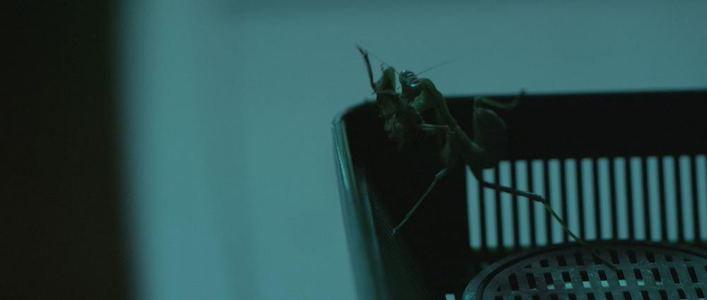 Untitled1_0006_Mantis.jpg.jpg