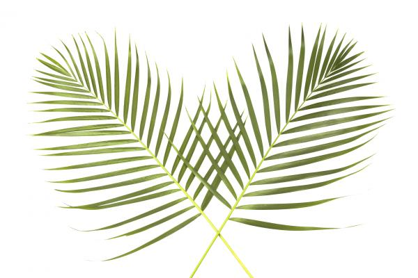 palm-sunday-global.jpg