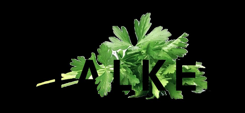 WEB-STALKER IMG-01-01-01.png