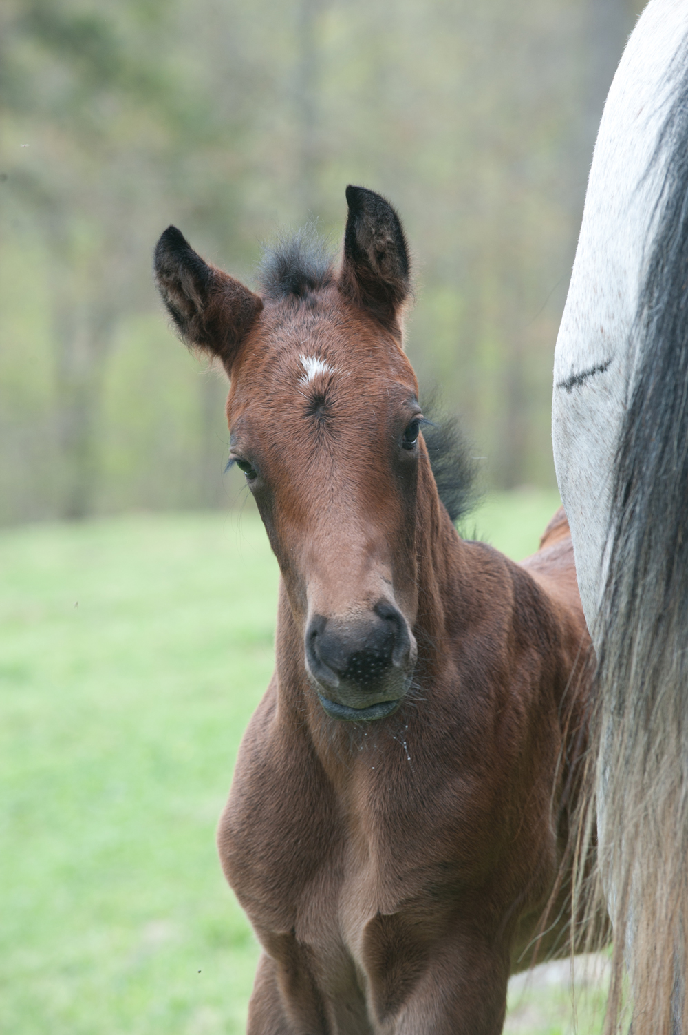 New foal at Rimrock Cove Ranch