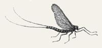 fly-sketch-small.jpg