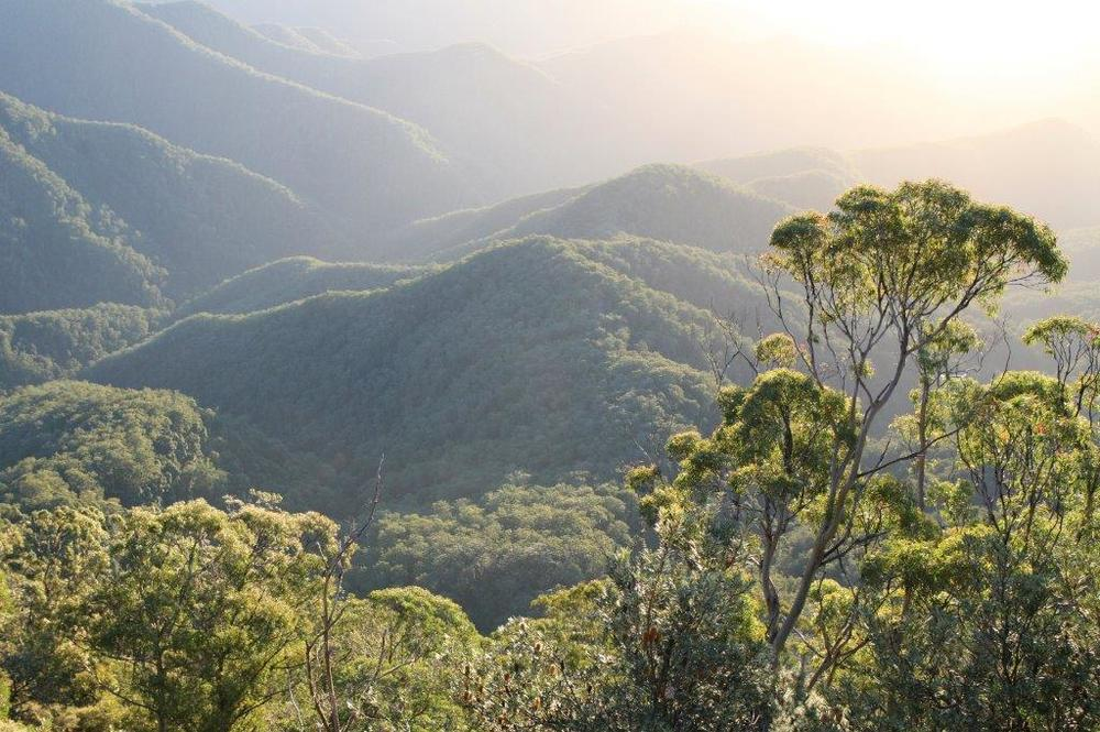 Northern Rivers abounds with World Heritage National Parks