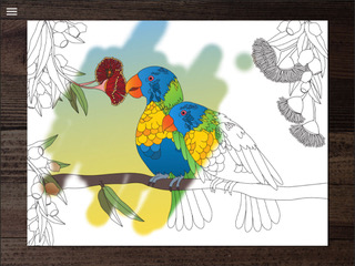 Colouring in of a familiar Australian parrot
