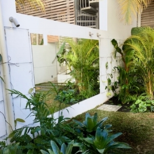 Same Courtyard, no longer bland, with a tropical personality and a mirror to increase the level of 'green' and sense of space.